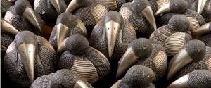 Crowed of penguins 960 jpeg_C9T8560